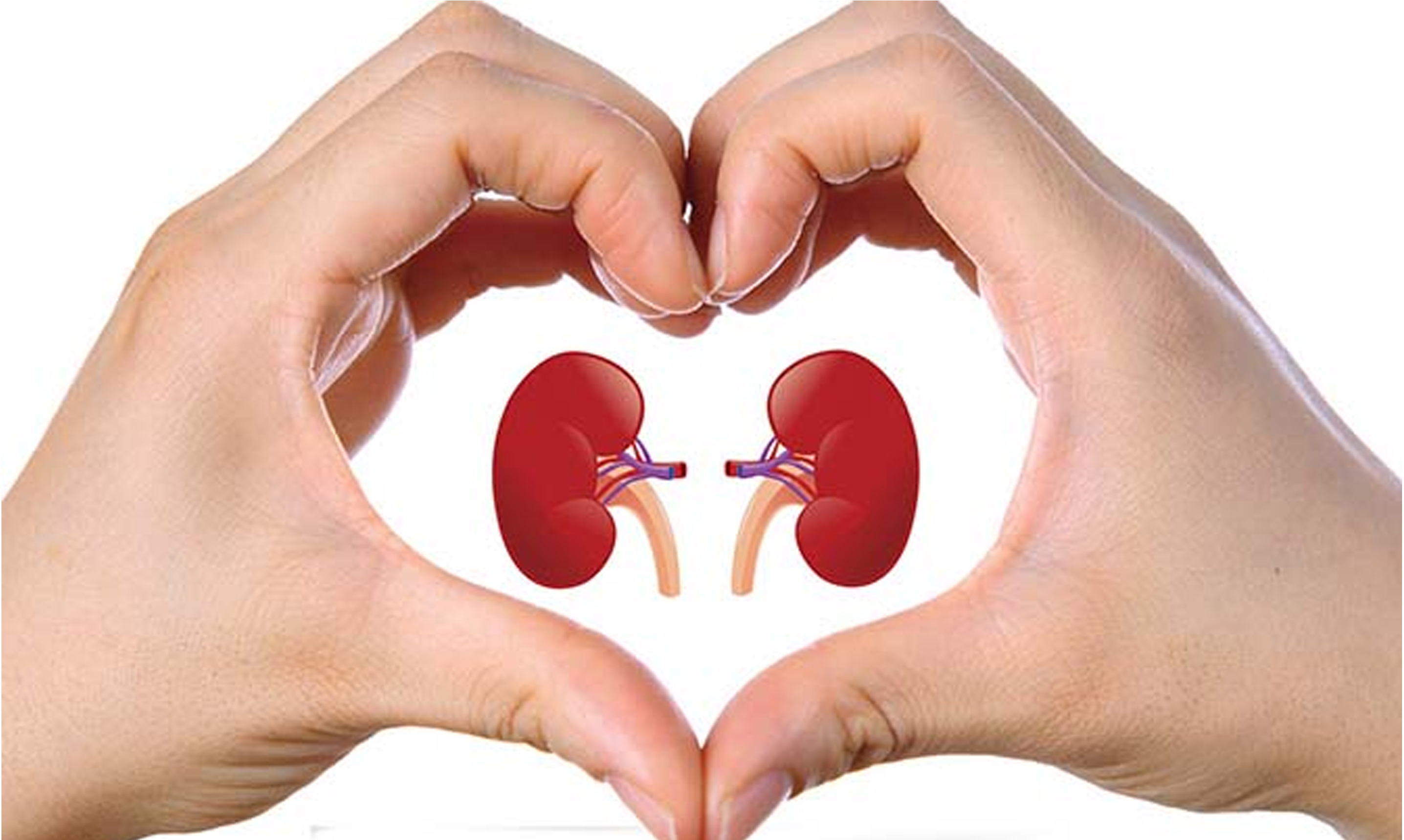 7 Tips for Maintaining Healthy Kidneys